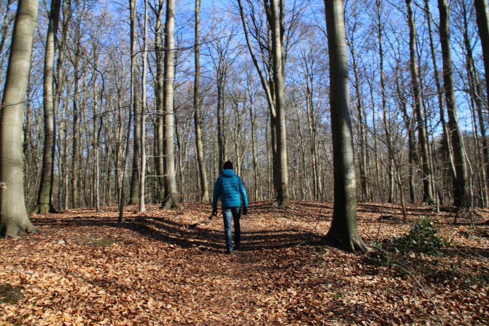 Старые протоптанные дорожки (дат. hulvejen) в лесу Торсков, Дания