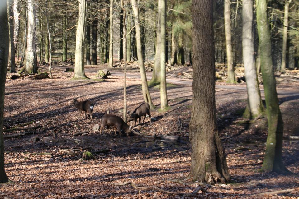 Пятнистые олени на водопое. Фото Фото 19 мар. 2021, парк животных