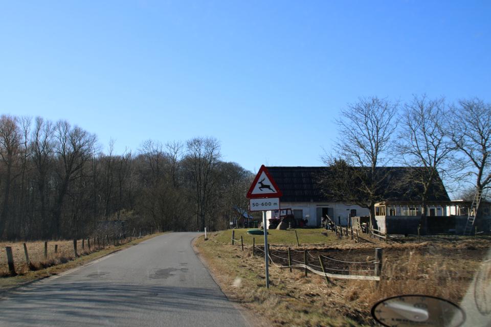 Дорожный знак - Дикие животные. 9 мар. 2021, Оддер, Дания