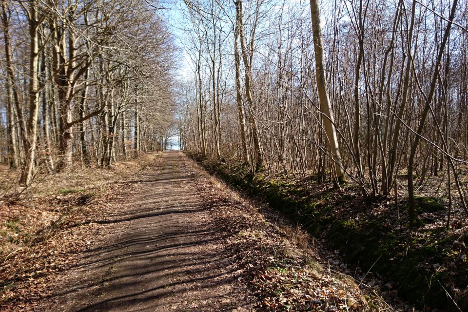 Лес Равнсков, порослевой лес. 9 мар. 2021, Оддер, Дания