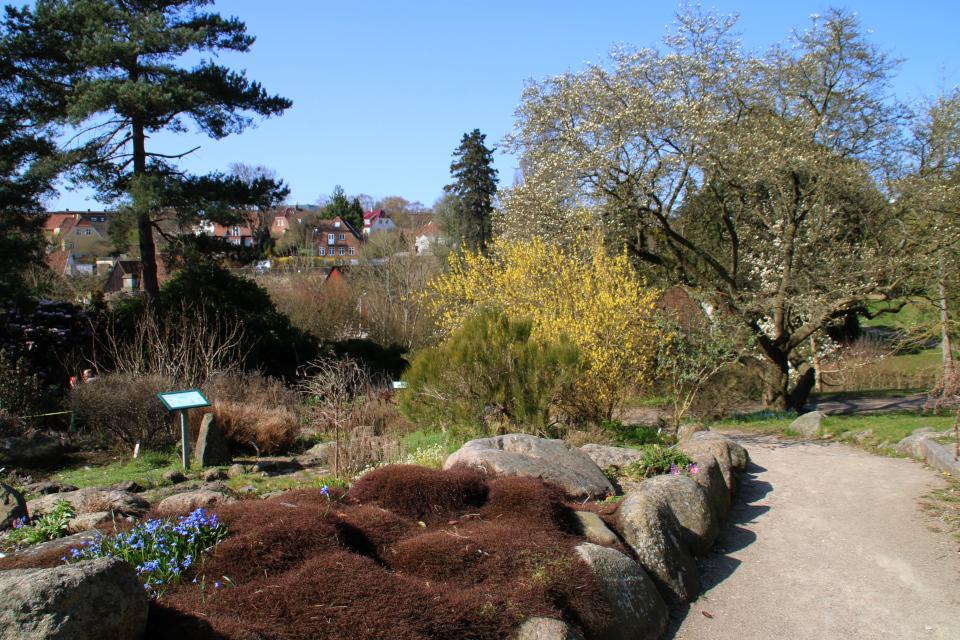 Каменистые горки ботанического сада г. Орхус, Дания
