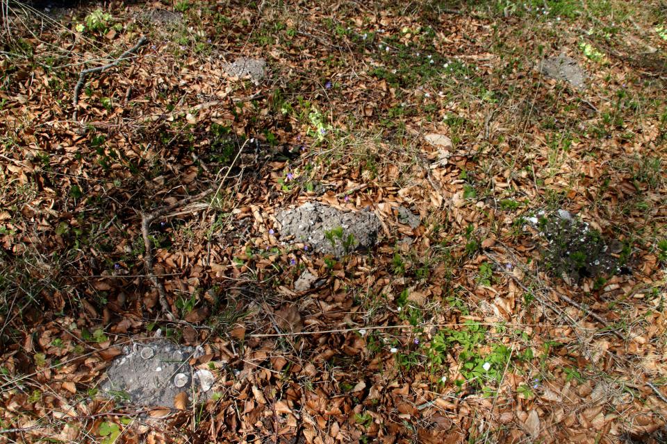 Кротовины в лесу с кьёккенмединг. Фото 25 мар. 2021, Майлгорд, Дания