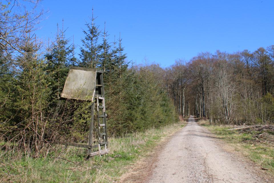 Охотничья вышка в лесу поместья Майлгорд. Фото 21 мар. 2021, Дания