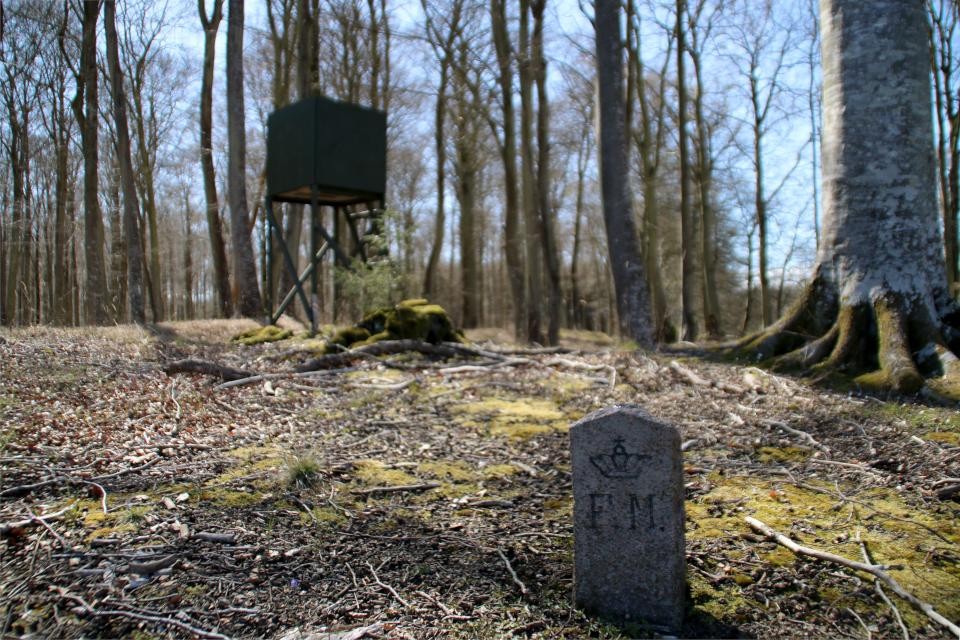 Охотничья вышка на месте охраняемого объекта в лесу Майлгорд, Дания. Фото 25 мар. 2021