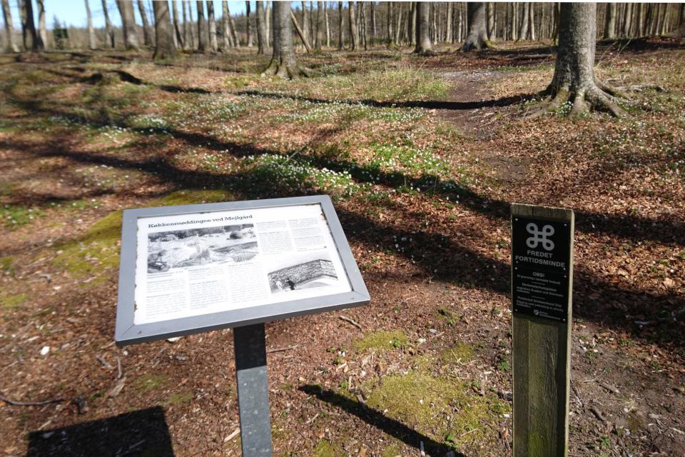 Информационный щит в лесу Майлгорд, Дания. Фото 25 мар. 2021