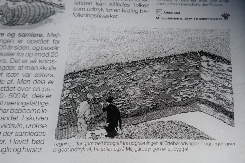 Иллюстрация с фотографии, сделанной во время раскопок. Фото 25 мар. 2021, информационный щит, Майлгорд, Дания