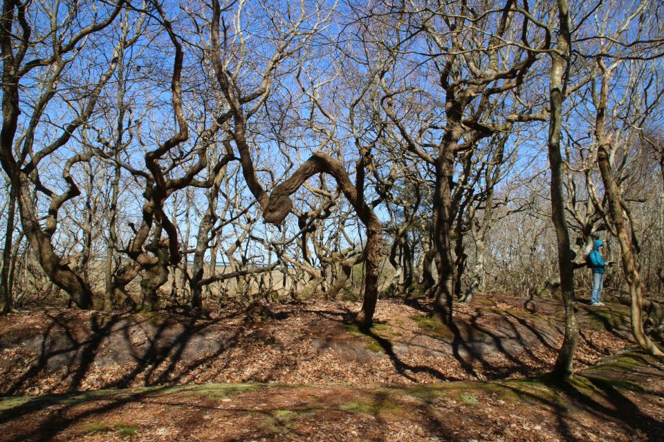 Лес троллей с окопами Бённеруп, Дания. 25 апр. 2021