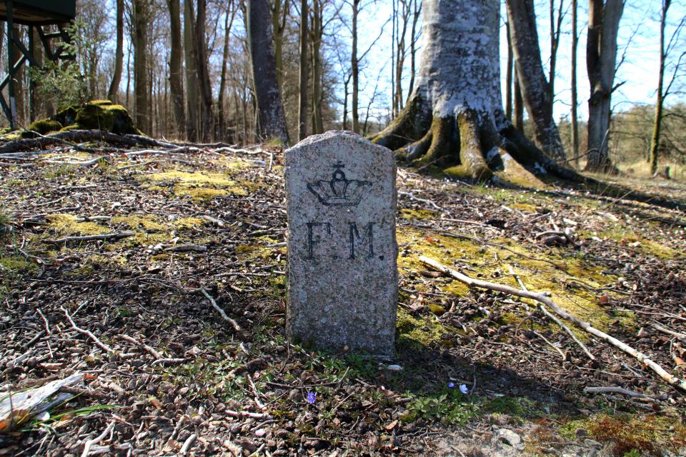 Печёночница благородная в Дании на месте раскопок кьёккенмединг в лесу Майлгорд. Фото 25 апр. 2021