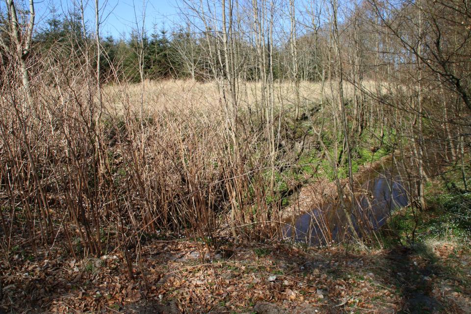 Лесная канава в лесу Майлгорд, Дания. Фото 25 мар. 2021