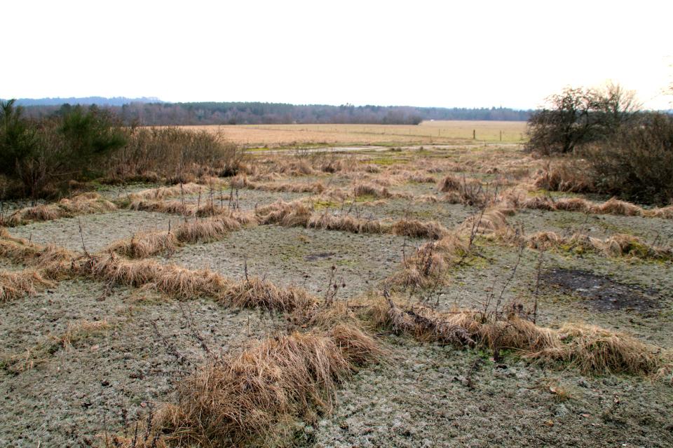 Вид на луг - бывший военный аеродром. Дания