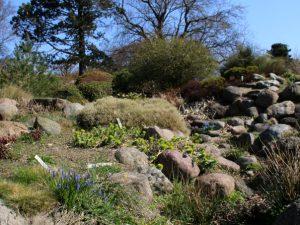 Ботанический сад Орхус 18 апреля 2021