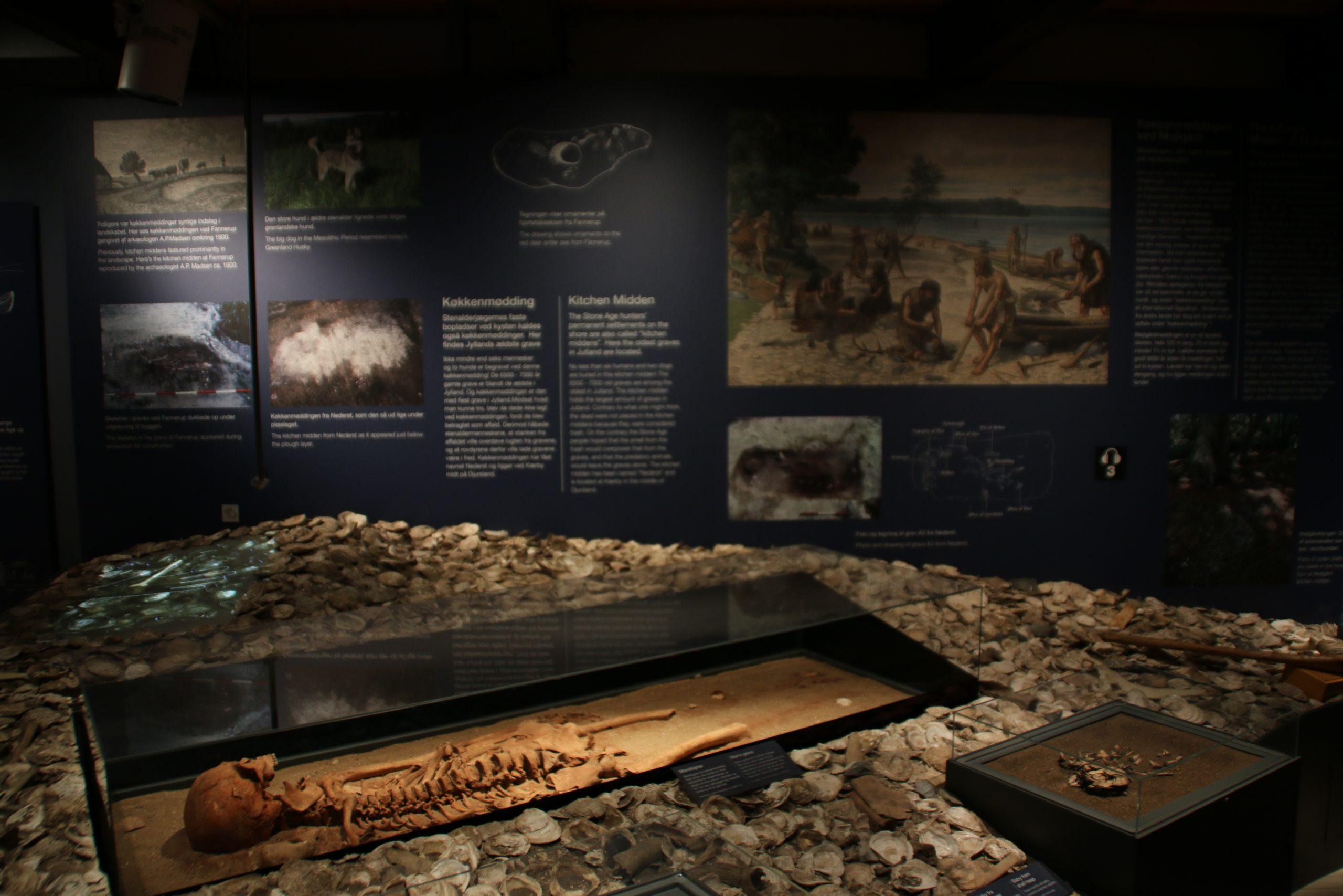Экспозиция про находки, сделанные на месте раскопок кухонных куч в лесу поместья Мейлгорд, в музее г. Грено, Дания. Фото 12 сент. 2020