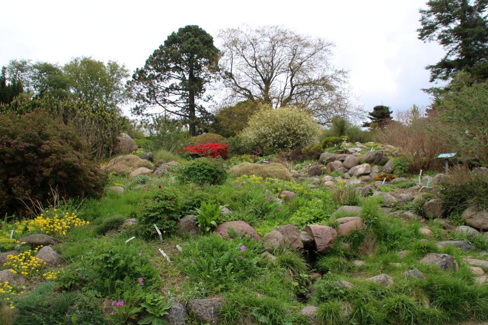 Каменистые горки ботанического сада в Орхусе.18 мая 2021, Дания