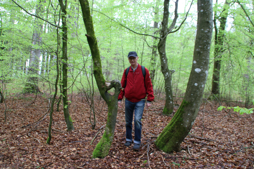 13 мая 2021, лес Скивхольме (Skivholme Præsteskov), Дания