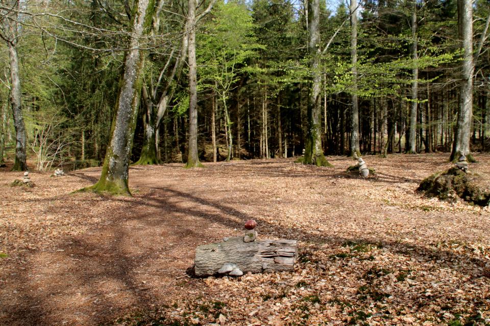 Сейды на пнях и стволах деревьев. Фото 9 мая 2021, Скивхольме, Дания