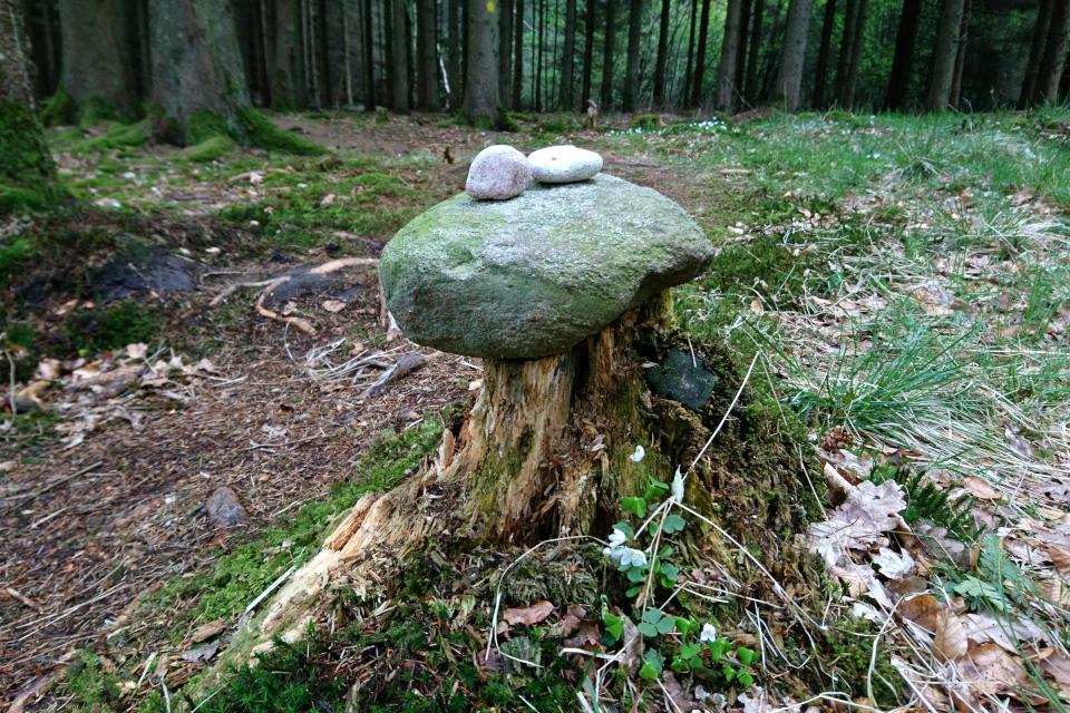 Каменный сейд на трухлявом пне в лесу Скивхольме, Дания. Фото 13 мая 2021