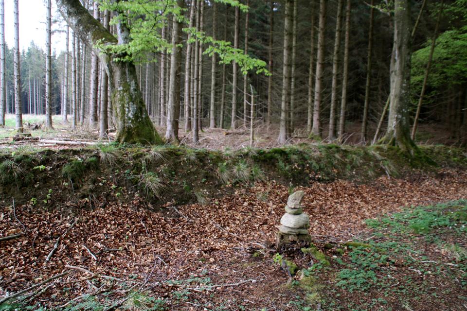 Сейд возле старой лесной ограды в лесу Скивхольме, Дания. Фото 13 мая 2021