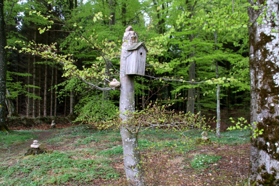 Скворечник и сейд на стволе дерева. Фото 13 мая 2021, Скивхольме, Дания