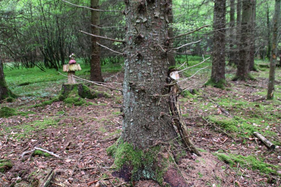 Тролли в хвойной части лес Скивхольме, Дания. Фото 13 мая 2021
