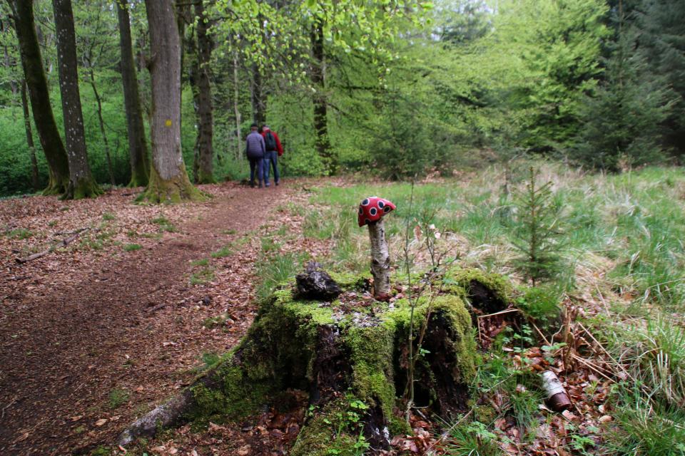 Мухомор, растущий на старом пне в лесу Скивхольме, Дания. Фото 13 мая 2021