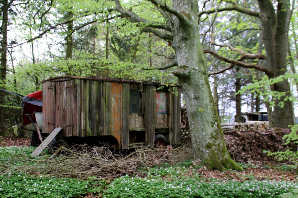 Старый цирковой вагончик в лесу Скивхольме, Дания. Фото 9 мая 2021