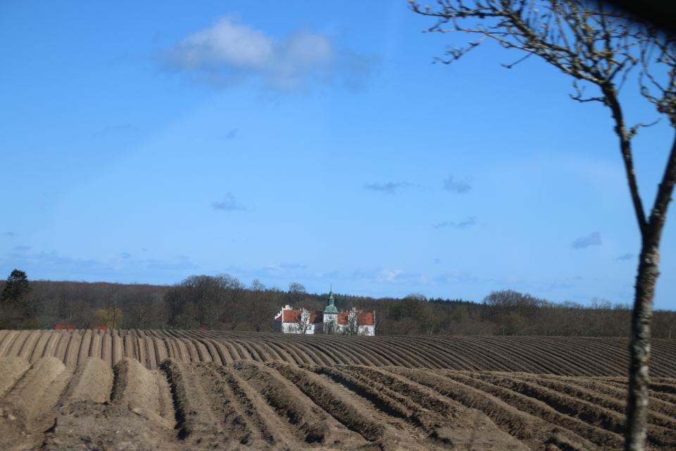 Картофельные поля. Поместье Майлгорд (Meilgaard gods). 25 апр. 2021, Глесборг, Дания