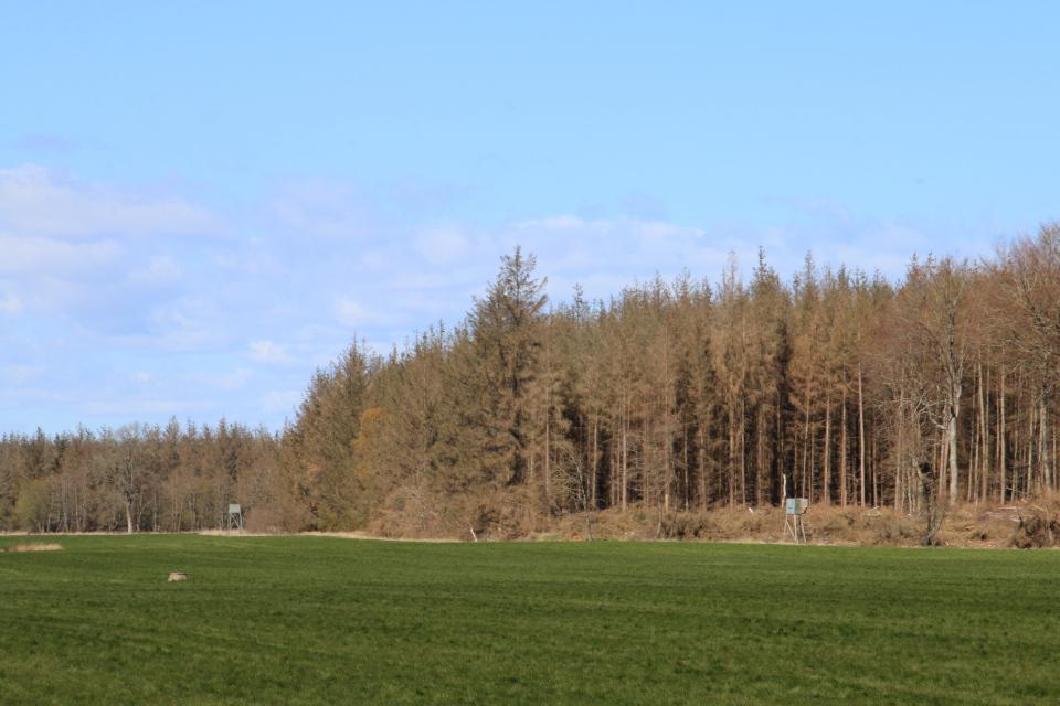 Охотничьи вышки. Поместье Майлгорд (Meilgaard gods). 25 апр. 2021, Глесборг, Дания
