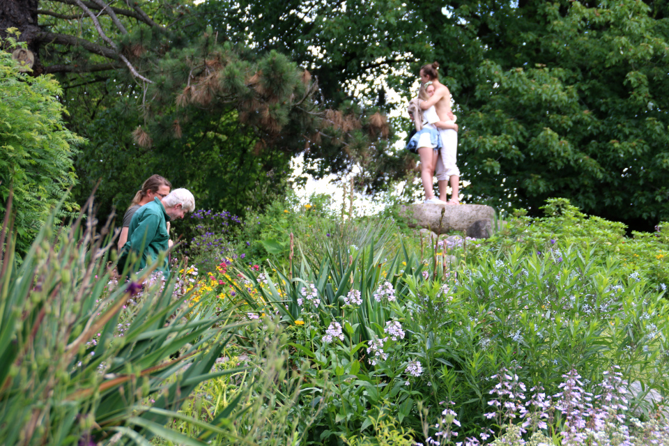 Каменистые горки ботанического сада г. Орхус, Дания. Фото 23 июня 2021