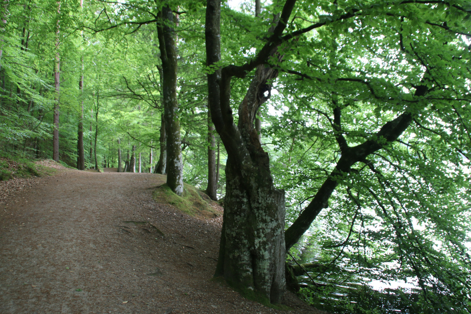 Бук-будка Слоэнсё Bog, 11июн21, Slåensø, Силькеборг, Дания