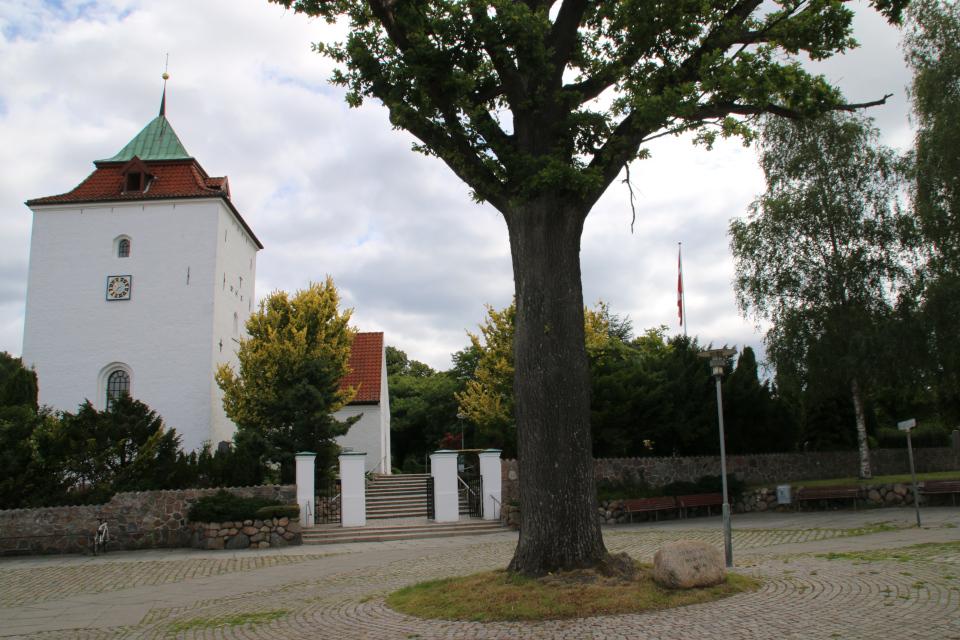 Дуб женщин возле церкви Вибю, Дания. Фото 25 июл. 2020