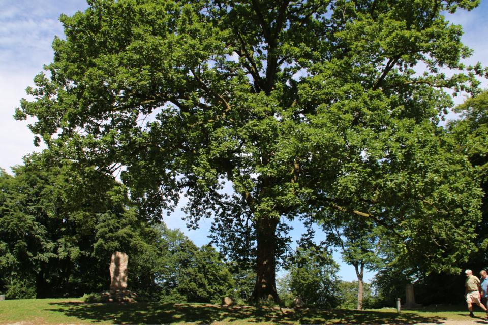 Памятник Блихеру (слева), женщинам Дании (с права в глубине) и дуб женщин на холмах Химмельбьерг, г. Рю, Дания. Фото 16 июн. 2021