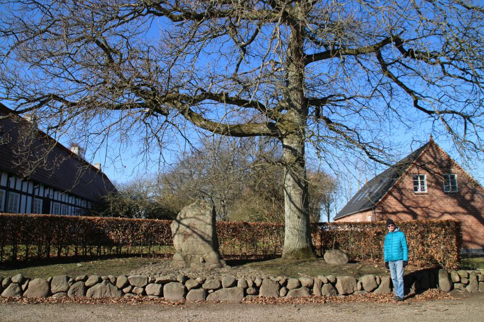 Мемориальный комплекс: дуб женщин с памятным камнем и памятник Блихеру. Фото 9 мар. 2021, г. Рандлев, Дания