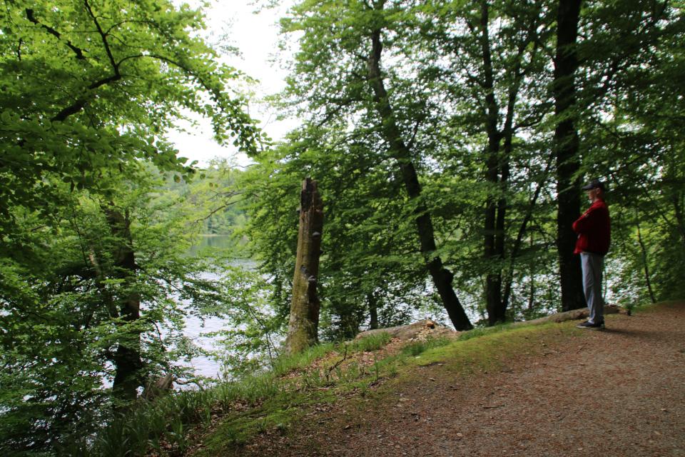 Озеро Слоенсо, Силькеборг, Дания. Фото 11 июн. 2021