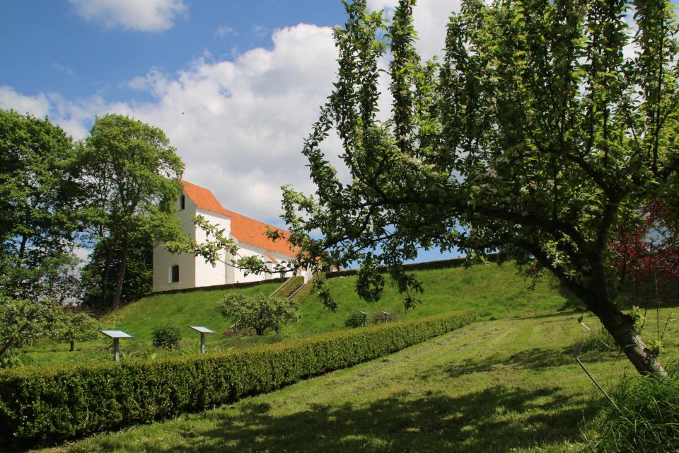 Сад с крещеными деревьями-яблонями. Фото 2 июн. 2021, монастырский сад Асмильд, г. Виборг, Дания