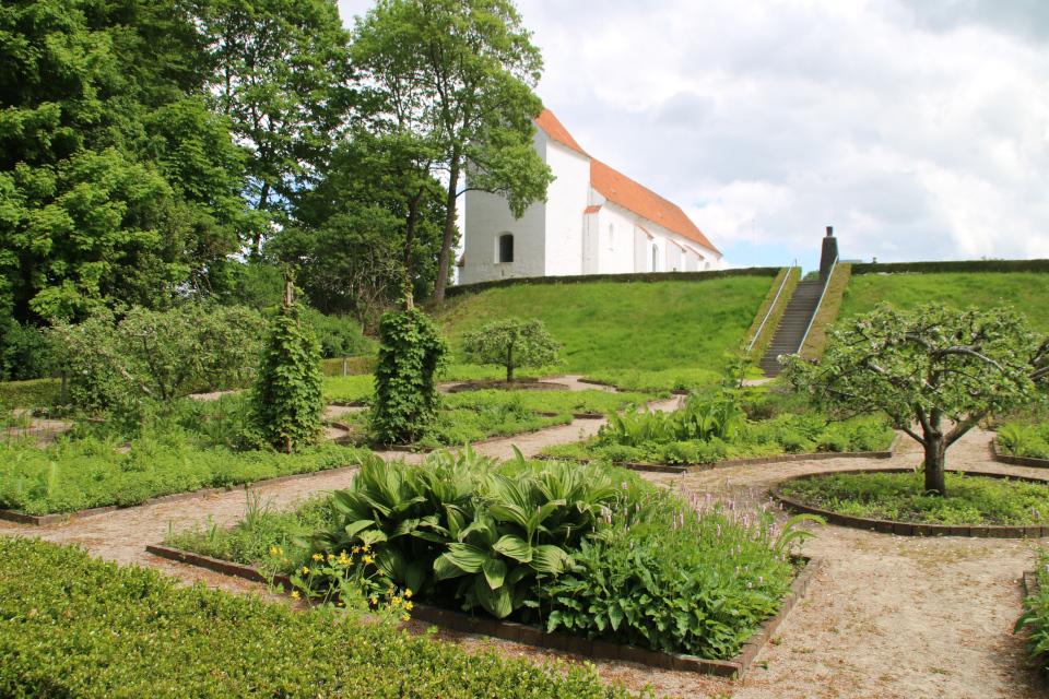 Вид на монастырский сад Асмильд со стороны клумб 1200 х годов (13 столетия), г. Виборг, Дания. Фото 2 июн. 2021