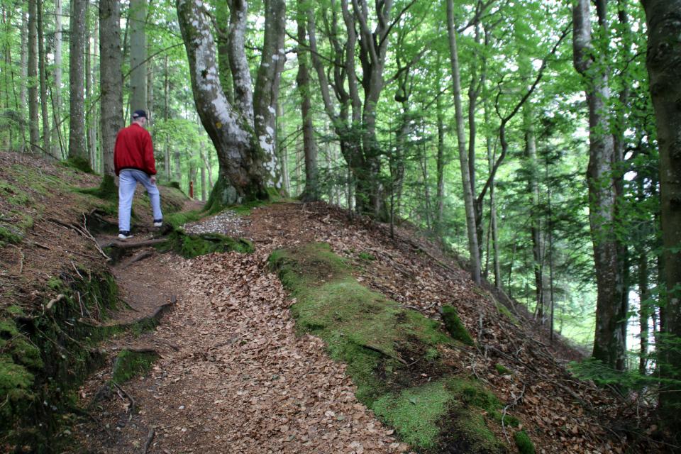 Буковый лес. Озеро Борре, Borre Sø, Дания. 11 июн. 2021