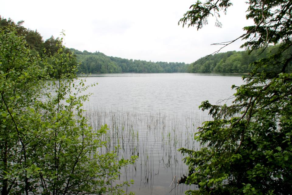 Озеро Слоэнсё, Slåensø, Силькеборг, Дания. Фото 11 июн. 2021