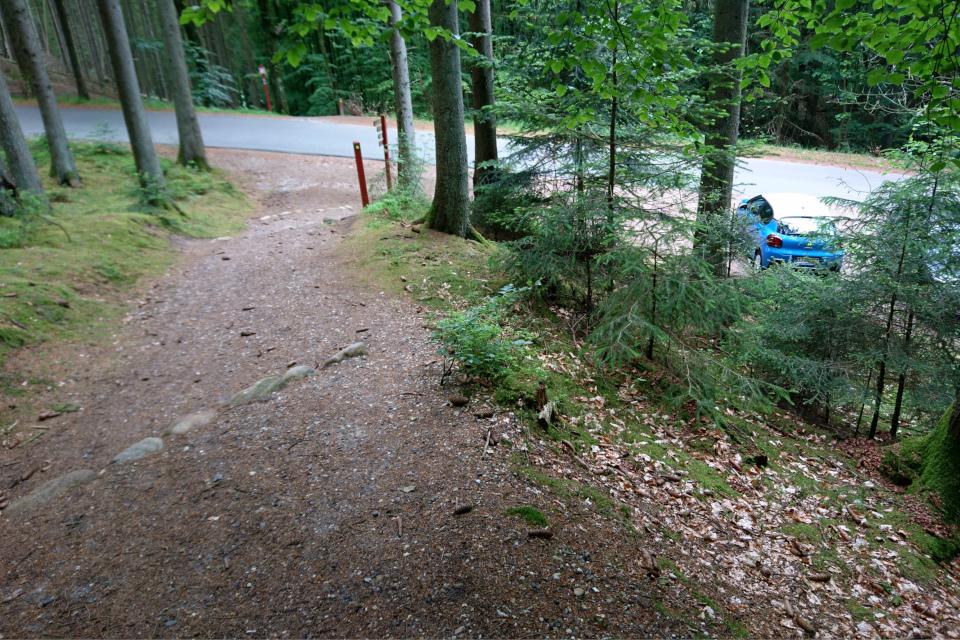 Еловый лес, Силькеборг, Дания. 11 июн. 2021