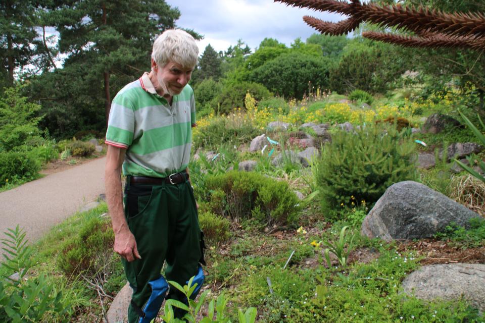 Поуль Эрик на каменистых горках ботанического сада г. Орхус, Дания. Фото 23 июня 2021