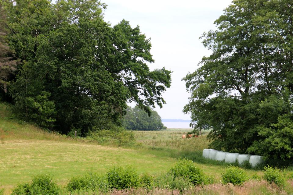 Мариагер, Айструп лес, Дания. Фото 29 июн. 2021