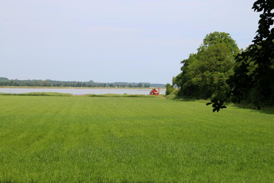Фьорд. Мариагер, Айструп лес, Дания. Фото 29 июн. 2021