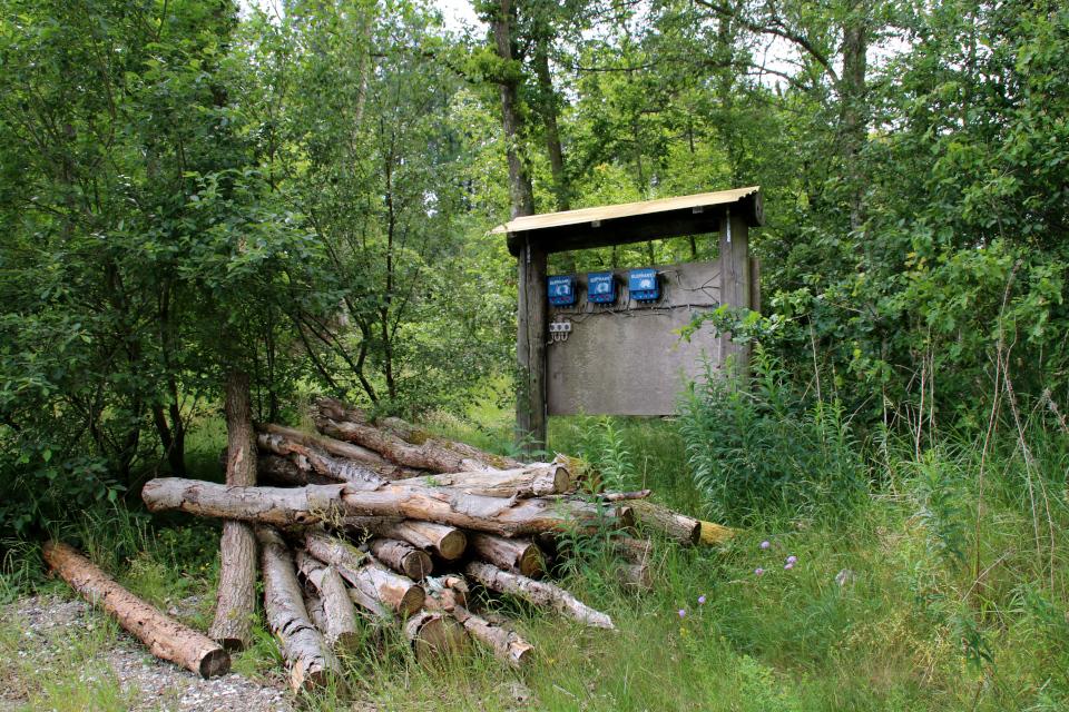 Электрическая изгородь. Мариагер, Айструп лес, Дания. Фото 29 июн. 2021