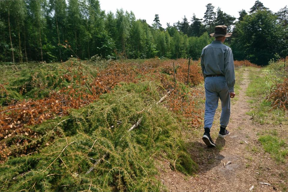 Частный лес. Мариагер фьорд, Дания. Фото 29 июн. 2021