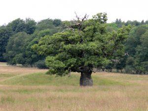 Деревья в парке животных Йегерсборг