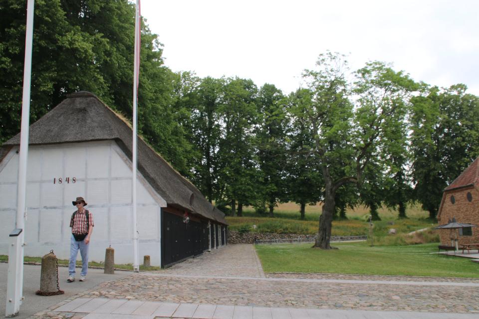 Клён с дуплами Мосгорд (hullede Acer Moesgaard), Дания. Фото 2 июл. 2021.