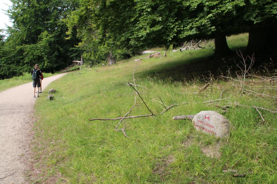 Лесопарк Охотничьи угодья в Северной Зеландии (Jægersborg Dyrehave), Дания. Фото 9 июля 2021