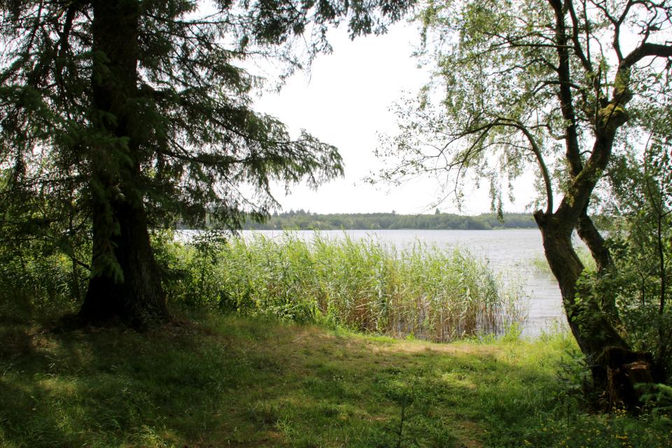Озеро Хампен (дат. Hampen sø), Дания. Фото 18 июля 2021