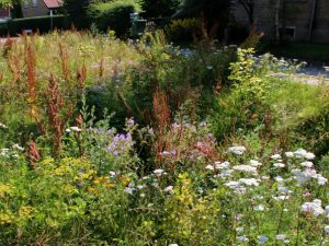 Растения водосточных канав