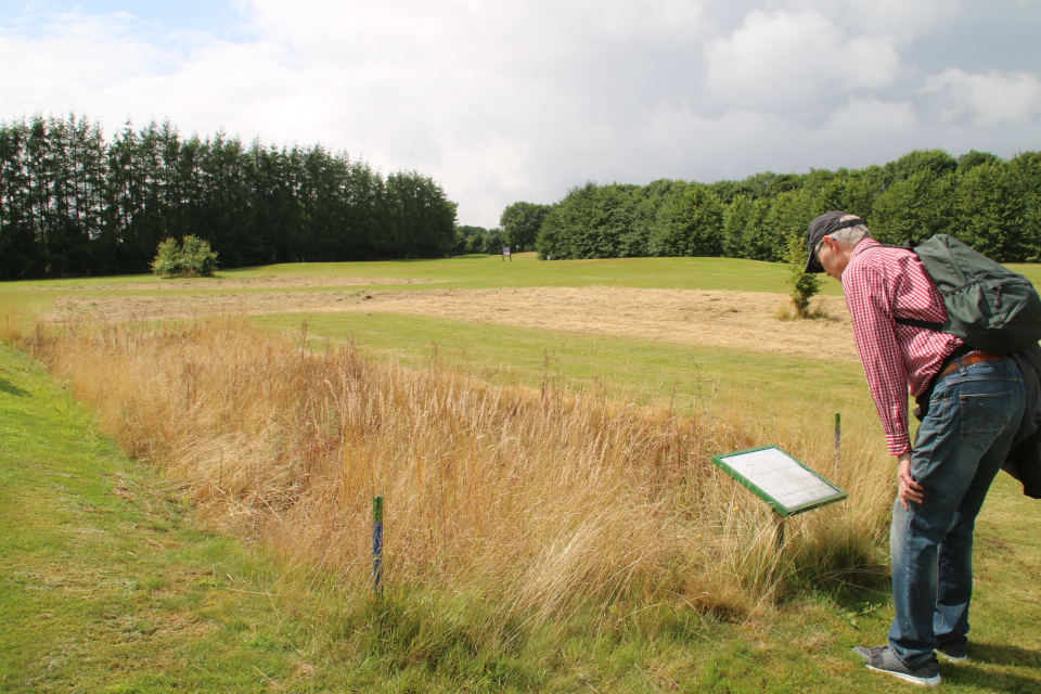 Старая дорога на гольф-поле Вайен (Vejstykke på Vejen Golfbane), Дания. Фото 28 июля 2021