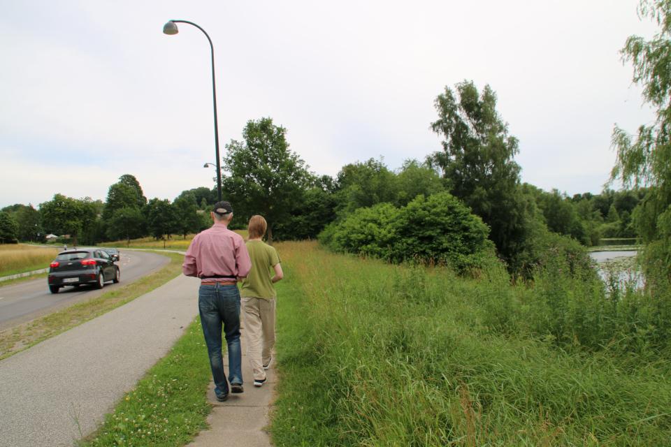 Дорожка к месторасположению памятника воссоединения, г. Биркерёд (Birkerød). Фото 8 июля 2021